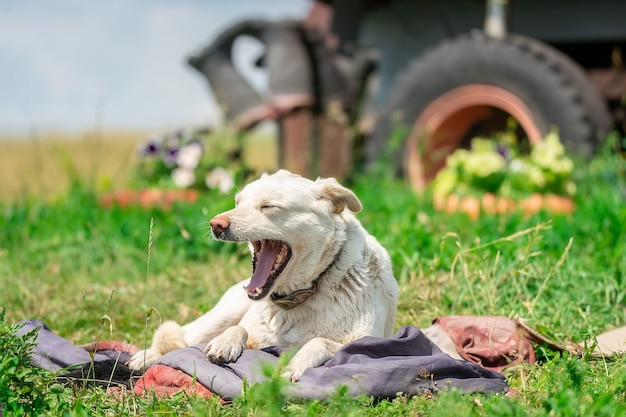 Werf verdwaalde hond in het park op het gras