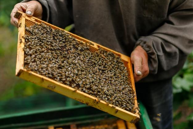 Werk op de wei. de imker houdt een frame met bijen vast