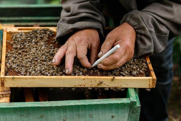 Werk op de wei. de imker merkt bijenkoningin op