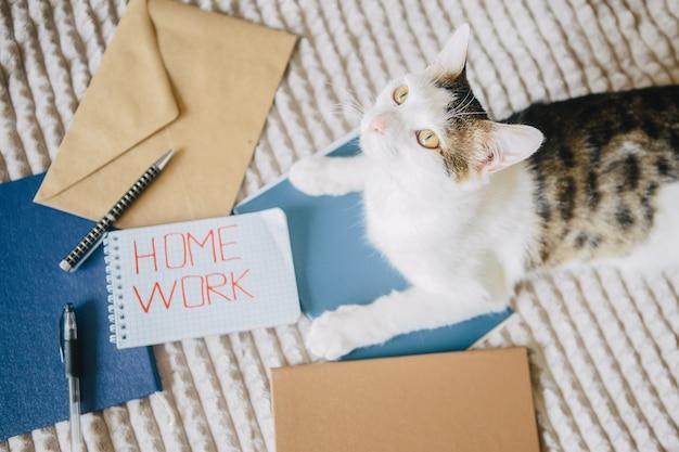Werk thuis, mappen, enveloppen en kat op het bed.