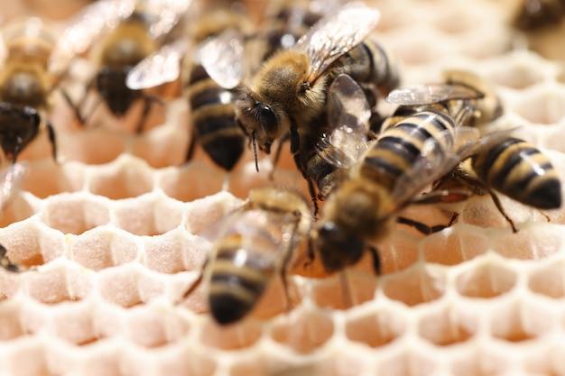 Werkbijen als ruggengraat van bijenteelt thuisconcept