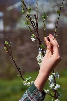 Werken in de lentetuin
