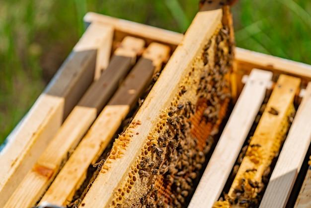 Werkende bijen in een bijenkorf.