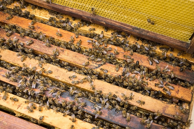 Werkende bijen op honeycells