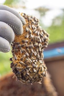 Werkende bijen op honingcellen in een korf