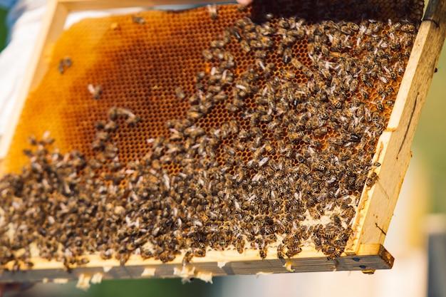 Werkende bijen op honingraat. frames van een bijenkorf. bijenteelt
