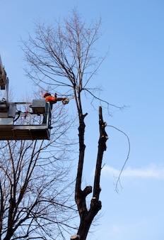Werknemer op kraan de bomen snoeien