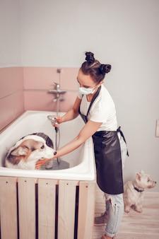 Werknemer wassen hond. donkerharige werknemer van trimsalon die masker draagt tijdens het wassen van de hond in badkuip Premium Foto