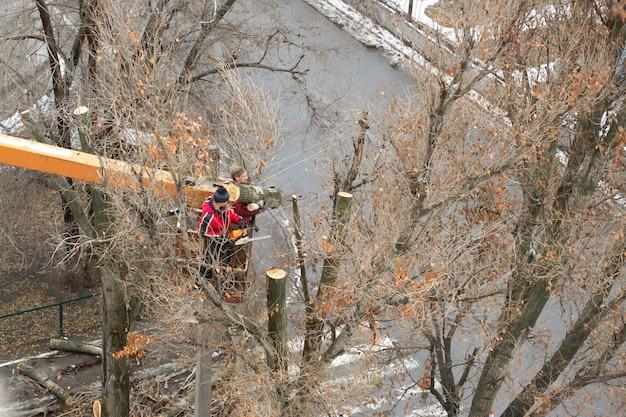 Werknemers in de gemeentelijke nutsbedrijven snijden boomtakken. snoeien van boomtakken die de stroomdraden verstoren
