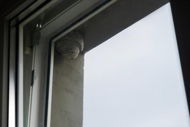 Wespenkorf hangend bij het raam in een stedelijk gebied. wilde bijenkorf buiten op het gebouw. niemand