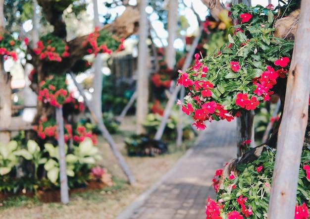 West-indische maagdenpalm, madagascar maagdenpalm, bringht eye, indische maagdenpalm, kaapse maagdenpalm, pinkle-pinkle, roze maagdenpalm, vinca, cayenne jasmin. wetenschappelijke naam is catharanthu
