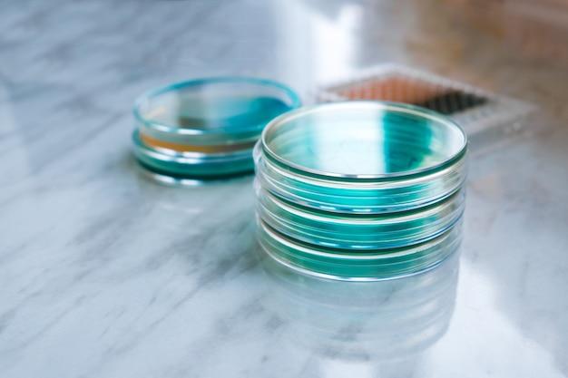 Wetenschappelijk laboratorium petrischalen gevuld met blauwe oplossing voor een biologisch experiment in een onderzoekslaboratorium