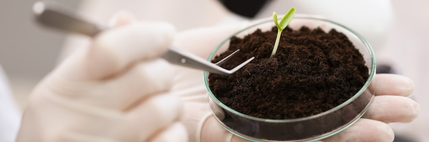 Wetenschapper die groene plant uit de grond haalt uit een petrischaaltje met een pincet in laboratoriumclose-up