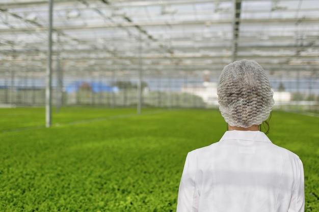 Wetenschapper die planten en ziekten in kas onderzoekt