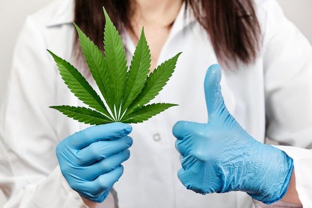 Wetenschapper of dokter vertoont tekenen zoals het gebruik van marihuana-plant.