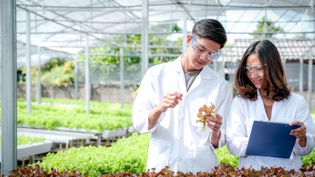 Wetenschappers onderzochten de kwaliteit van plantaardige biologische salade en sla van een hydrocultuurboerderij