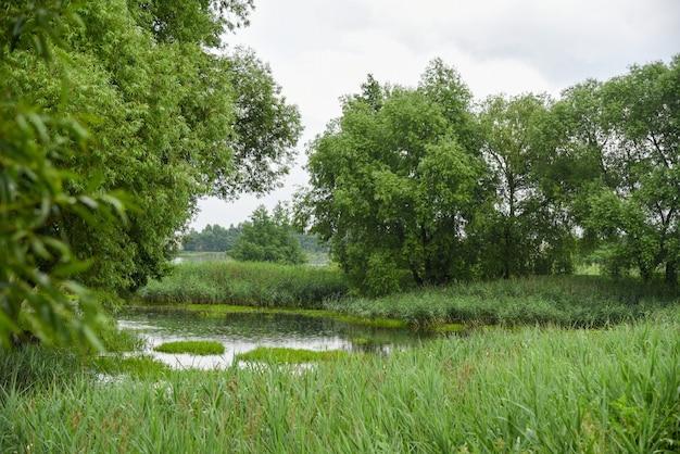 Wetlandlandschap in het bos in wit-rusland.