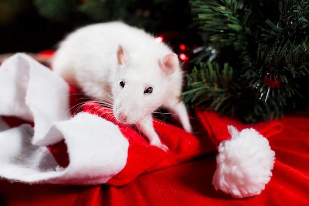 White rat symbool van 2020 nieuwe jaar close-up