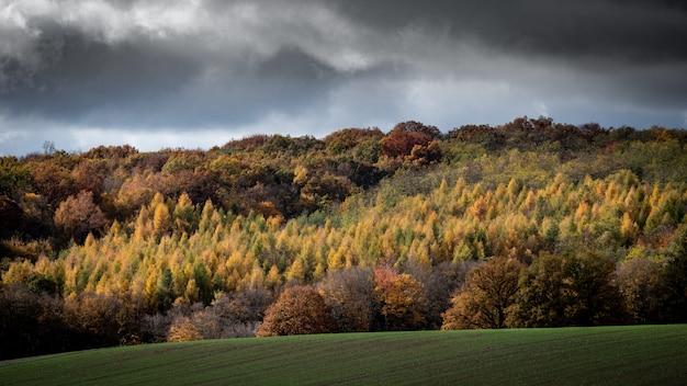 Wide shot van beboste heuvels met een bewolkte hemel op de achtergrond
