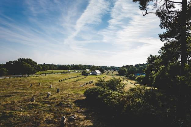 Wide shot van een grasveld omgeven door bomen onder een heldere hemel