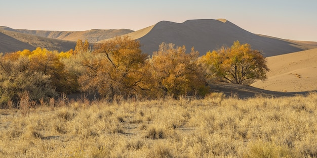 Wide shot van een woestijn met gedroogde struiken en zandduinen overdag