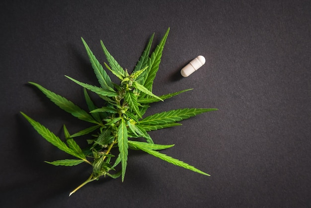 Wietplant met een hoog cbd-gehalte en medicinale pil