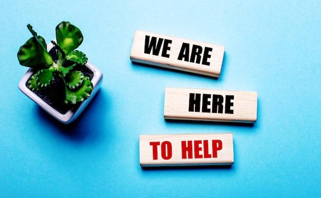 Wij zijn hier om te helpen staat geschreven op houten blokken op een lichtblauwe muur bij een bloem in een pot
