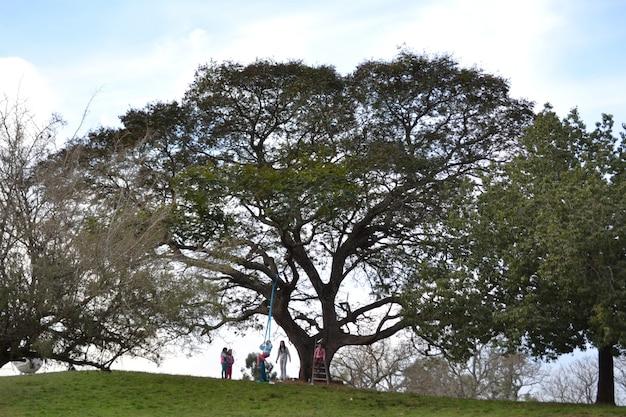 Wijd geschoten van mensen die van een tak van de levensboom slingeren
