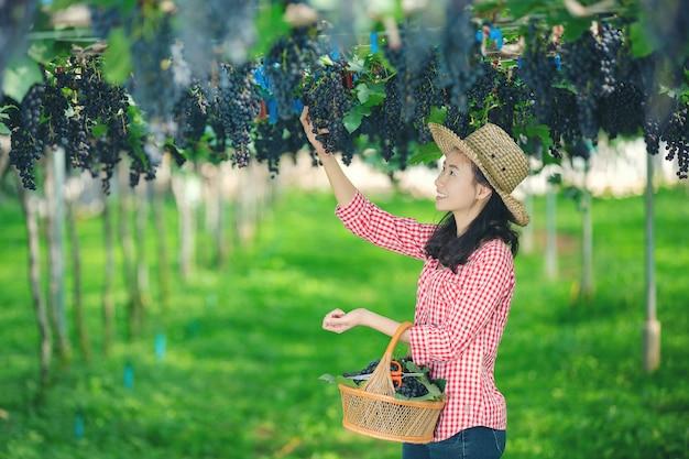 Wijnboeren die lachen en genieten van de oogst.
