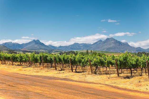 Wijngaard en de bergen in franschhoek-stad in zuid-afrika Premium Foto