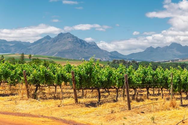 Wijngaard en de bergen in franschhoek stad in zuid-afrika
