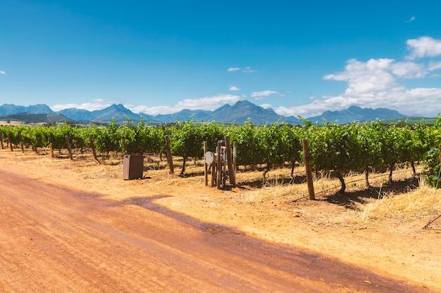 Wijngaard en de bergen in franschhoek stad in zuid-afrika Premium Foto