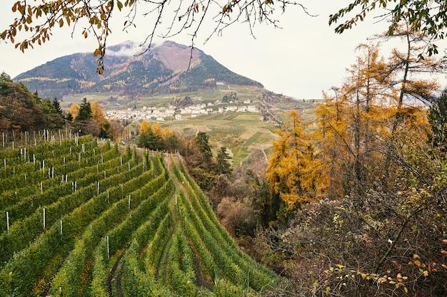Wijngaard, herfstbos en bergen in trento