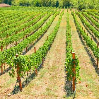 Wijngaard in griekenland - griekse landelijke landscpe