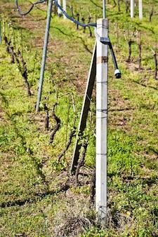 Wijngaard met een druppelirrigatiesysteem dat langs de top van de wijnstokken loopt