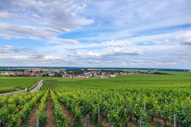 Wijngaard schilderachtig landschap