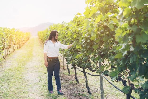 Wijngaardarbeider die druivekwaliteit in wijngaard controleren.