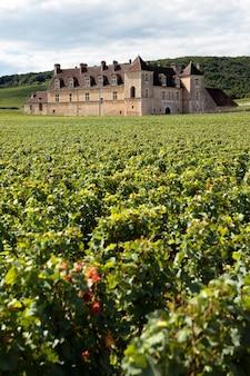 Wijngaardchateau bourgondië, frankrijk