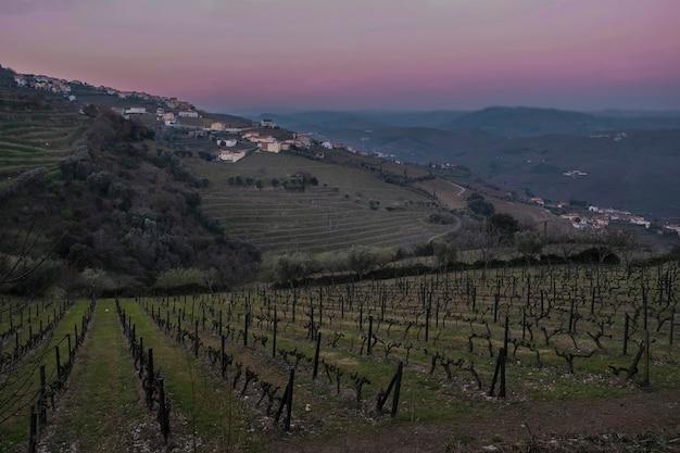 Wijngaarden in een landelijk gebied in de rivier de douro-vallei nabij de stad regua bij zonsondergang in het vroege voorjaar