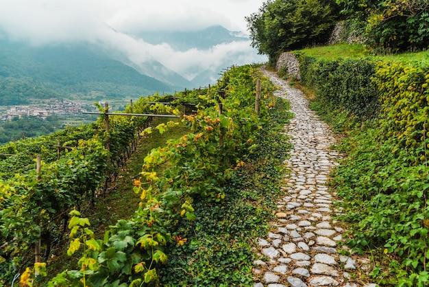 Wijngaarden op de berghelling tijdens de herfst.