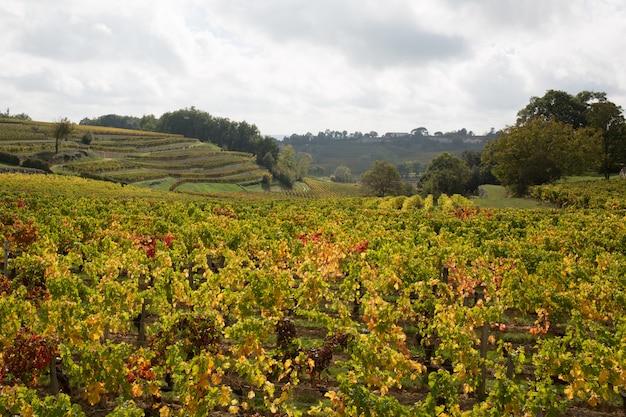 Wijngaarden van saint-emilion ten zuidwesten van frankrijk, bordeaux