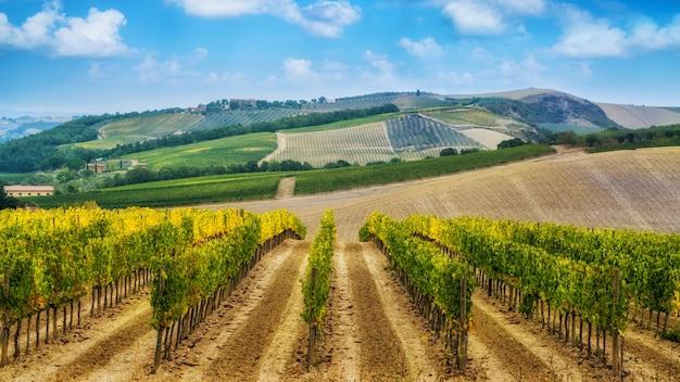 Wijngaardlandschap in toscanië, italië.