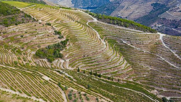 Wijnplantages op grote stukken land