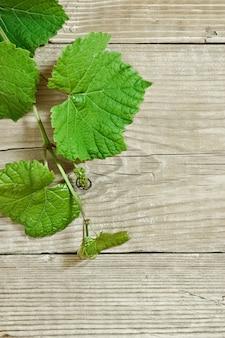 Wijnstok op houten achtergrond