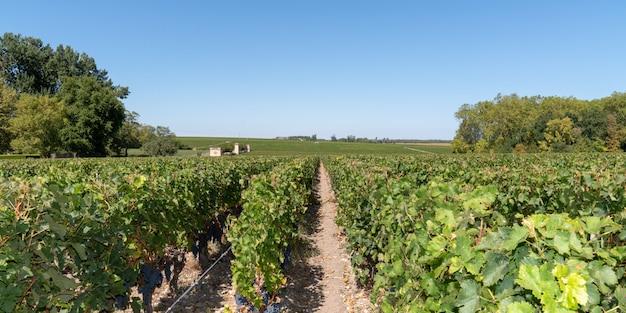 Wijnstokken chateau margaux landschapspanorama