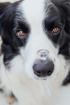 Wil je met me trouwen grappig portret van schattige puppy hondje border collie met trouwring op neus isolat...