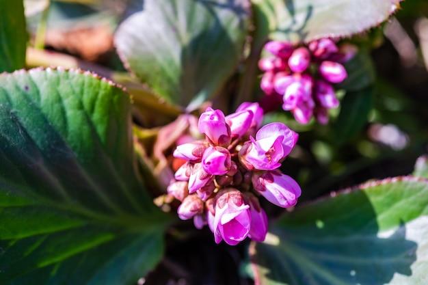 Wild bloeiende plant in het voorjaar