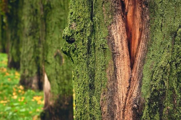 Wild bos bedekt met groen mos, natuur achtergrond.