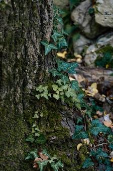 Wild bos gevangen in daglicht