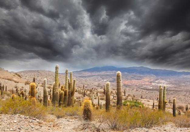 Wild cactus op de altiplano in het andesgebergte van argentinië